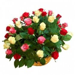 50 Colour Roses